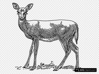 Doe Drawing
