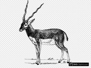 Standing Antelope
