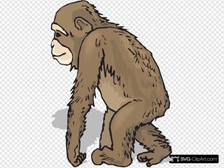 Walking Chimp