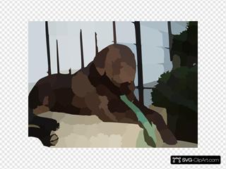 Blurred Pet Dog Photo