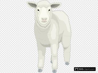 Wooly Sheep Facing Forward