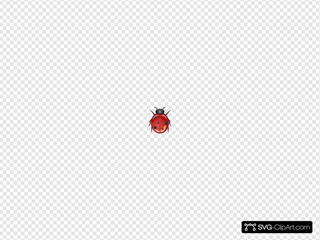 Ladybug 6