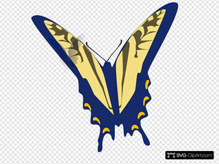 Blue And Gray Butterfly