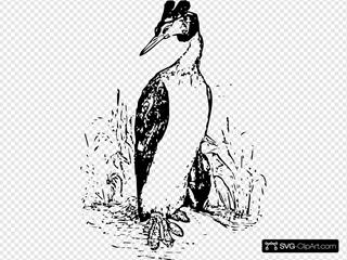 Standing Duck