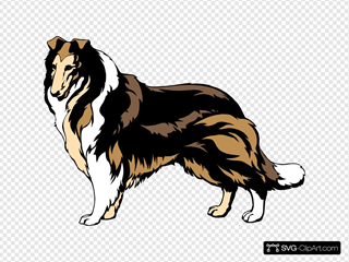 Black And Brown Collie