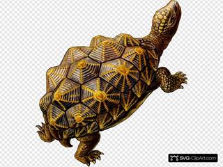 Prehistoric Turtle Walking