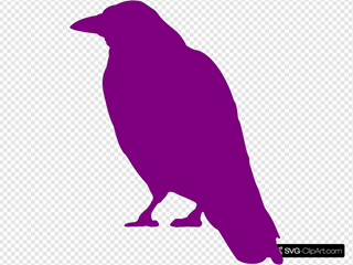 Violet Crow Silhouette