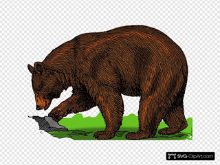 Bear SVG Cliparts