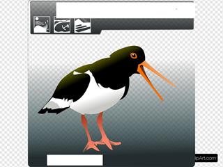 Ostrero Oyster Catcher SVG Clipart