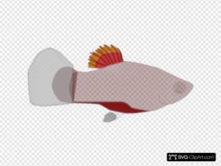 Red Aquarium Fish Clipart