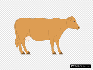 Brown Cow Side View