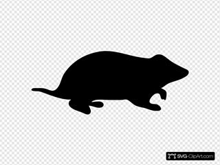 Contour Hamster