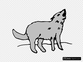 Gray Howling Coyote