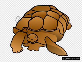 Turtle Cartoon Clipart