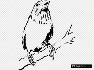 Staring Bird On A Branch
