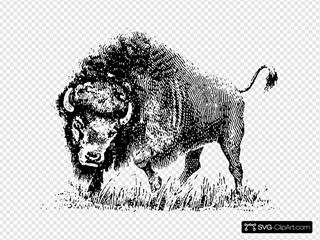 Buffalo SVG Clipart