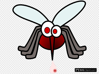 Mosquito With Blood