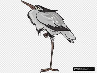 Gray Heron Standing On One Leg