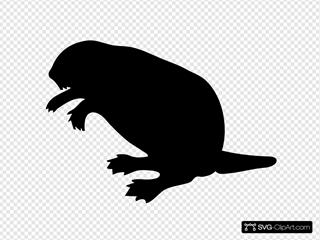 Contour Beaver