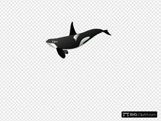 Orca SVG Clipart