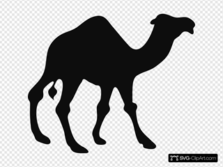 Walking Camel Silhouette