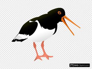 Oyster Catcher Bird SVG Clipart