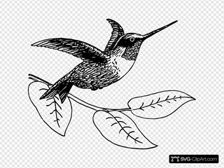 Hummingbird Carrying Vine