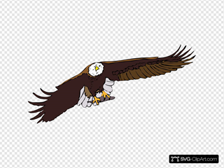 Aquila Frontale SVG Clipart
