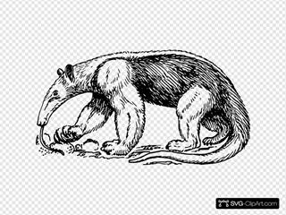 Eating Anteater
