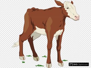 Brown And White Baby Cow