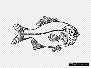 Ugly Fish Clipart