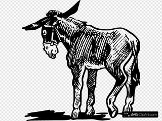 Donkey Outline In Black And White