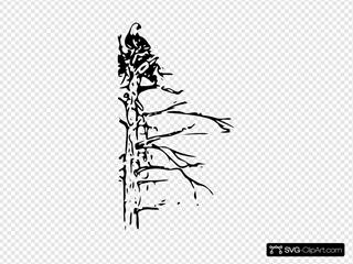 Bald Eagle SVG Clipart