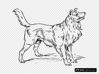Collie Dog SVG Clipart