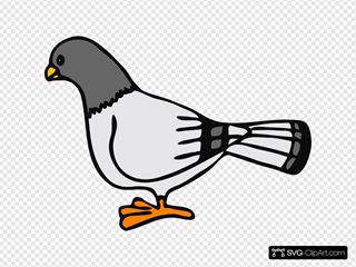 Pigeon 2 SVG Cliparts