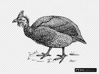 Fowl Bird