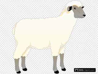 Sheep Side View