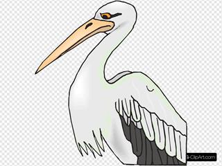 Pelican With Sharp Beak
