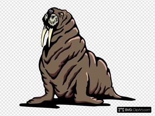 Wrinkled Walrus