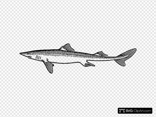 Dogfish Fish