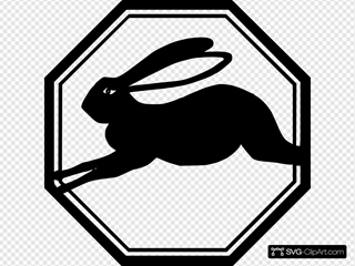 Rabbit Running Animal