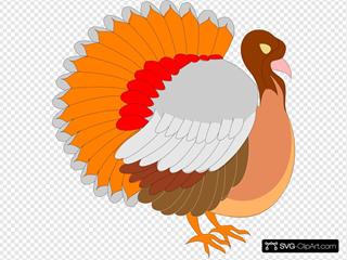 Turkey Side View