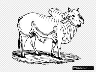Brahma Bull SVG Clipart