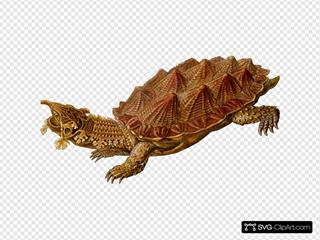Prehistoric Spiked Turtle