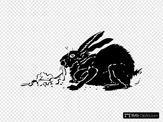 Black Rabbit Eating Lettuce