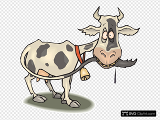 Cow Chewing Tail