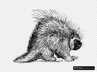 Porcupine Rodent