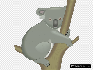 Koala In Tree SVG Clipart