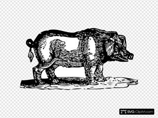 Hog SVG Clipart
