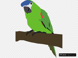 Parrot SVG Clipart